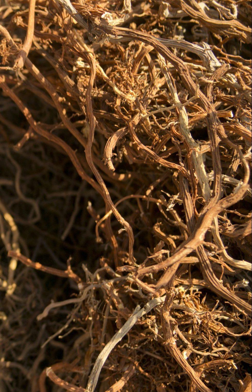 Jamaican Sarsaparilla Root Manufacturer | Jamrow ...